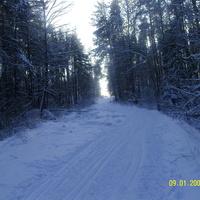Лесная лыжня около д. Митинская