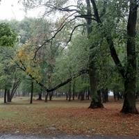 парк Маньковичи  - усадьба Радзивиллов