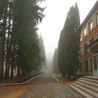 Крапивенский лесхоз-техникум в Селиваново, ул. Мичурина, 8