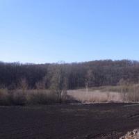 Лес Тарапун