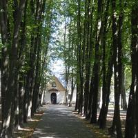 Аллея парка имени А.В.Суворова