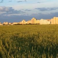 Салiгорск на фоне поля