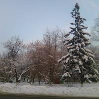На Почтовой улице у остановки «Завод ЛиАЗ» в Ликино-Дулёво