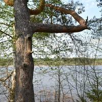 Озеро у дер. Сомёнка
