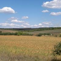 Малигоново. Фермерское кукурузное поле.