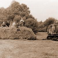 Волково, заготовка сена, 1965 г.