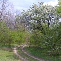 Окрестности Плескачёвки со стороны Сокирного.
