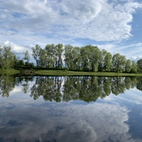 Река Сож, деревня Мирогощь, природа