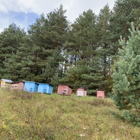 Пасека у леса, деревня Мирогощь