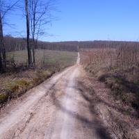 Лесная дорога из Матвеевки до Рублевки.