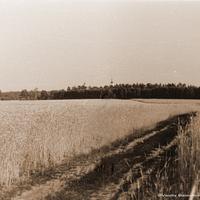 Окрестности д. Волково, 1963 г. На дальнем плане церковь Воскресения в Рощине