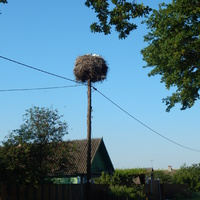 Гнездо аистов на деревенской улице
