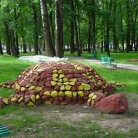 черепаха в парке