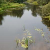 Река Дрисса (вид с моста у д.Янковичи)