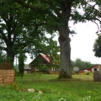 Вид издаалека на мемориальный камень и дубы Повалишина