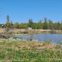 д. Филатьево,  пруд у деревни