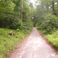 """Графская дорога"""" (в XIX в. это были владения графа М. Воронцова) бывший парк князя Воронцова в наше время поглощён лесом."""