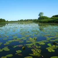 Мелетский пруд