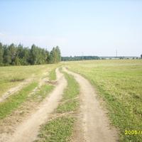 тимошки, дорога от деревни к озеру
