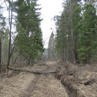 дорога из урочища Наумово в урочище Скропусково, весна 2010 года.