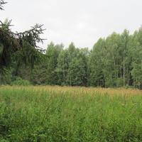 урочище Наумово, остатки поляны, лето 2011 года.