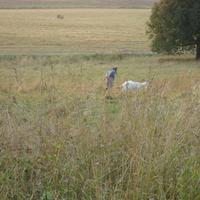 Единственная коза в Кувечино 2010 г.