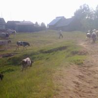 выгон скота