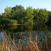 Река Сейм у деревни Мелова Солнцевского района Курской области