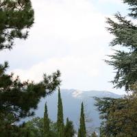 Парк Ливадия - Сквозь Ели