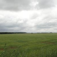 СНТ Дубровка, поле