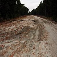 Рыжая дорога