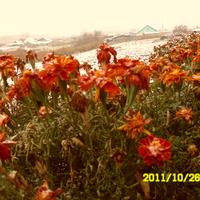 Завьялово - поздние цветы