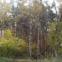 Алтуфьевский лесопарк