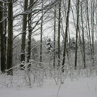 зима в Бирюлево