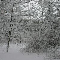 Занесло снегом