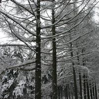 ветви деревьев