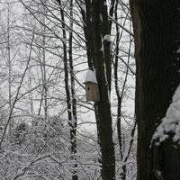 Скворешник на дереве