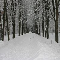 Занесённая снегом аллея
