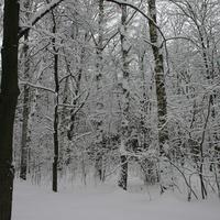 Зимой в Бирюлево