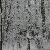 Загорьевский лес
