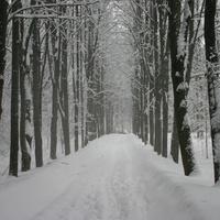 Парк зимой в Загорье