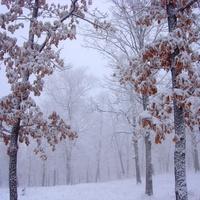 Амурск. Начало зимы