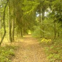 Родной лес