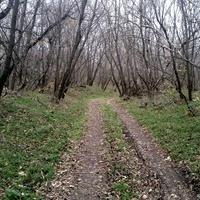 Дорога к старому парому.