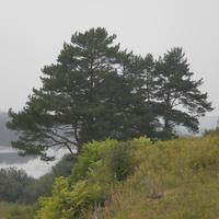 берег чепцы в кушмане