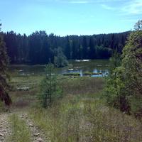 Спуск к пруду