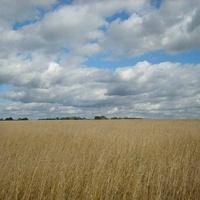 поле у села Перхушково