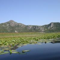 Растительность на притоке Скадарского озера