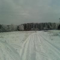 Снежедь зимой