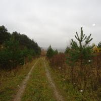 дорога в Протасово через поле